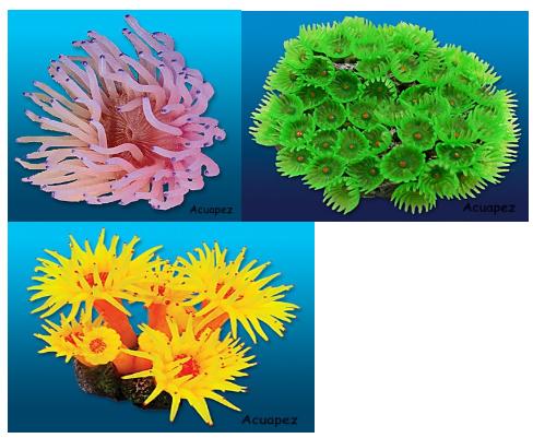 corales para peceras more