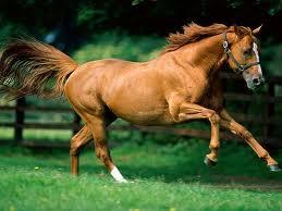 Comprar Medicamentos para caballos