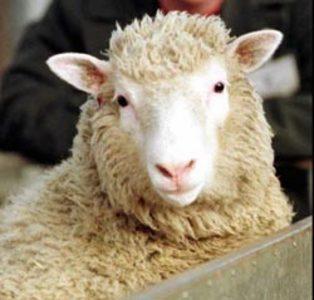 Comprar Medicamentos para ovejas