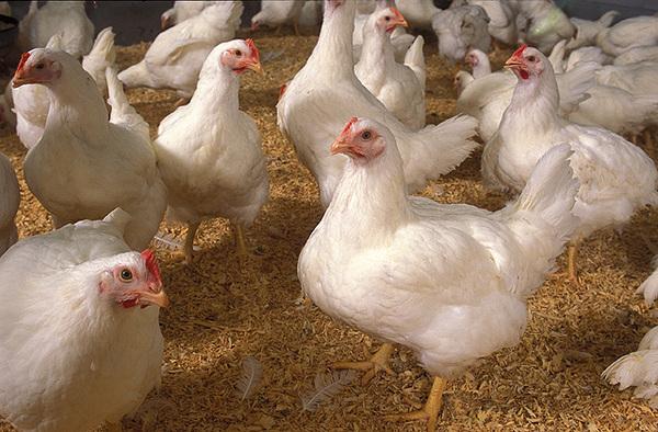 Comprar Medicamentos veterinarios para aves