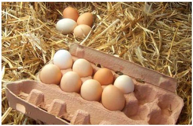 Comprar Huevo de Rancho