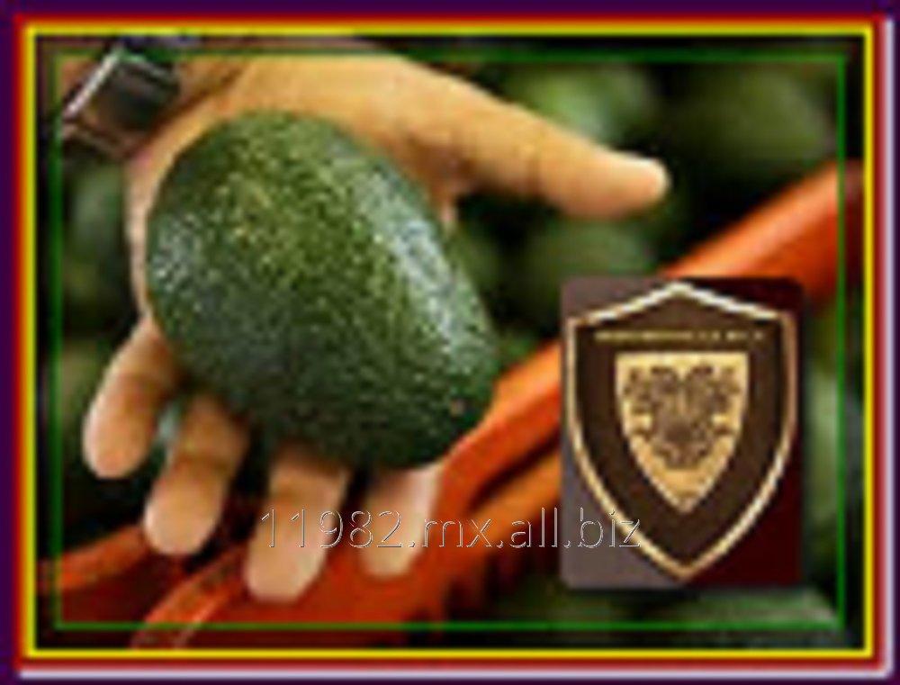 Comprar Avocado