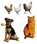 Nourishment therapeutic for animals