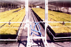 Systems of a drop irrigation