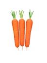 Zanahoria Soneto
