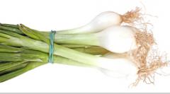 Cebolla con rabo