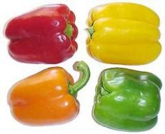 Pimiento morron ó Bell pepper ó Capsicum Annuum