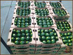 Aguacate (Avocados, Palta)