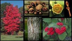 Semillas de hortalizas y mas de 500 especies entre aboles, palmeras, gramineas, pastos, etc.