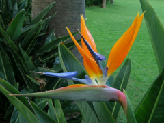 Long-standing flowers