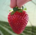 Variedad de frutas.