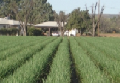 Productos agrícolas.