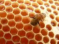 Beeswax: Purity and Majesty.