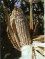 Adherentes agrícolas