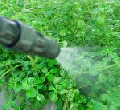 Insecticidas, Herbicidas, Plaguicidas