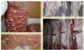 Comercialización de carne y vísceras