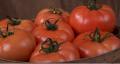 Tomato bola