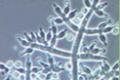 Microorganismos benéficos para el suelo