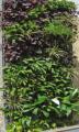 Módulo de pared verde