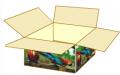 Cajas de carón en color