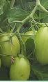 Fertilizantes.