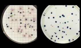 Pedido Microbiología Cualitativa