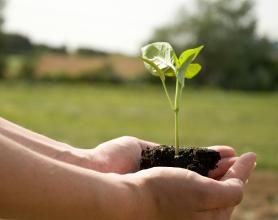 Pedido Reciclaje de deshechos orgánicos