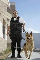 Detectives Privados Coes-celaya