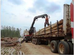 Control de plantaciones forestales