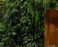 Plantas en interiores