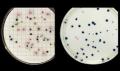 Microbiología Cualitativa